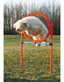 Trixie Dog Activity Agility Ring (Orange/Blue)