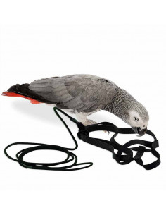 Pawzone Bigger Bird Harness