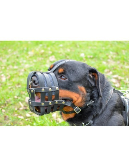 Pawzone Red Imported Muzzle