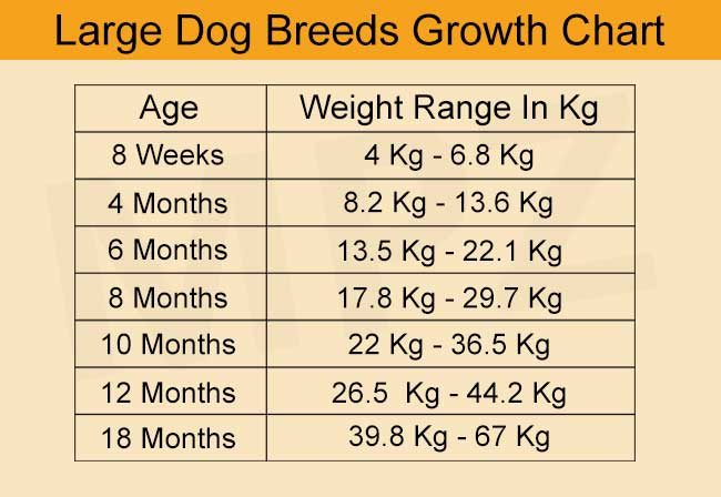 Puppy Development Stages And Growth Chart Avada Forum