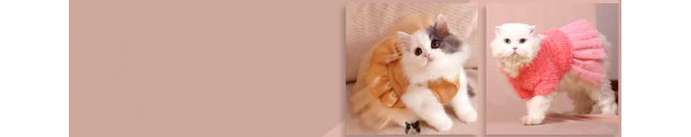 Buy cat clothes online at lowest prices.
