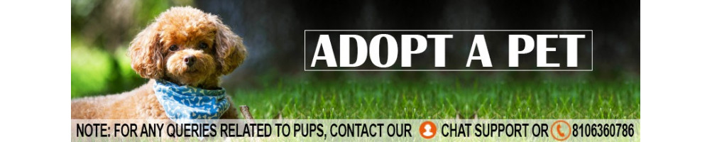 Get the pet adopted online India | Lowest price guarantee