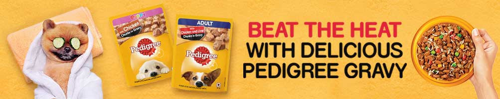 Shop for Wet Dog Food Pouches Online at best prices in India