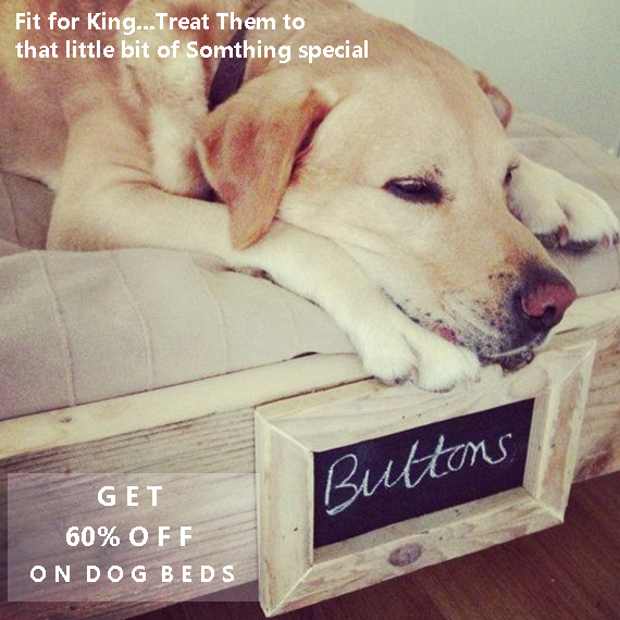Dog Beds online