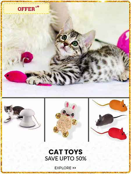CAT TOYS NEW
